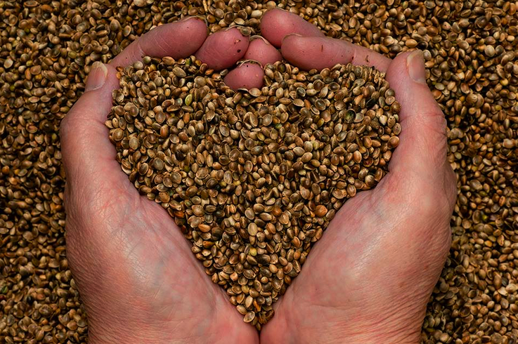 Colorado Group laying Groundwork for Industrial Hemp Co-op