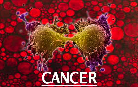 20 Studies Show Endocannabinoids May Help Cure Cancer