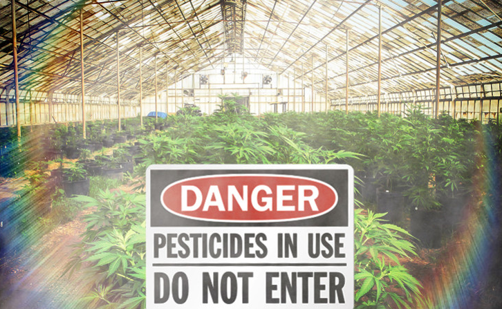 Canadian Medical Pot Producer faces Lawsuit over Pesticides